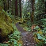 forest pathway great pix