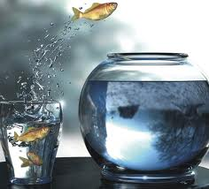 Fish jumping to live life in the big pond