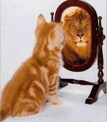 confidence cat lion pix
