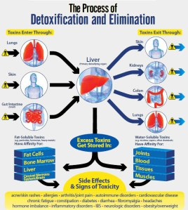The Process of Detoxification and Elimination
